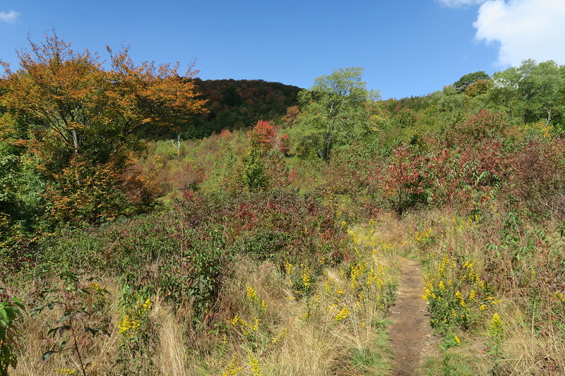 Graveyard Fields Connector Trail -- 5,120'