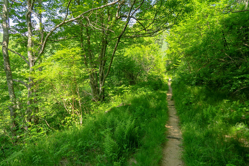 Graveyard Ridge Trail -- 5,340'