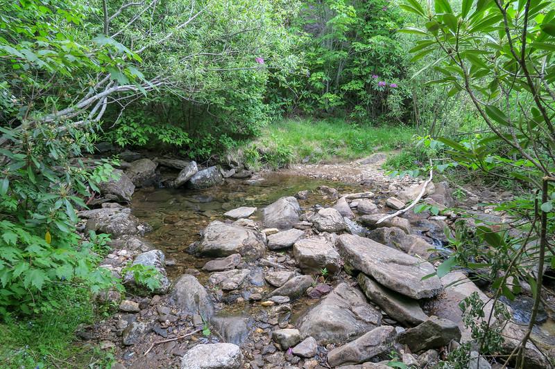 Graveyard Ridge Trail @ Dark Prong -- 5,410'
