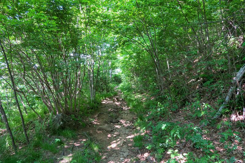 Graveyard Ridge Trail -- 5,290'