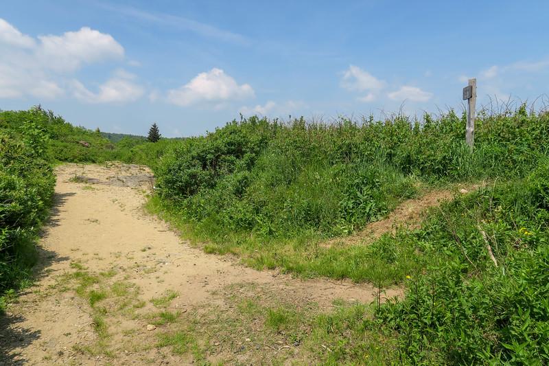 Graveyard Ridge/Art Loeb Trail Junction (Ivestor Gap) -- 5,700'