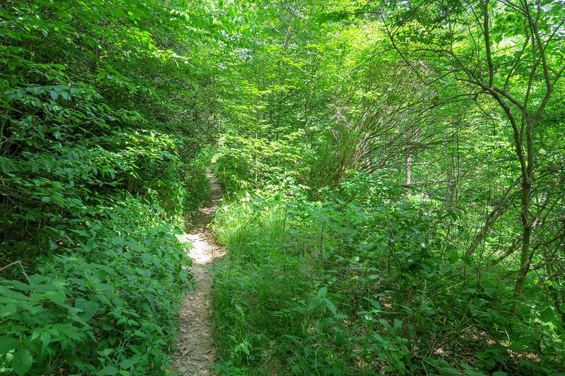 Graveyard Ridge Trail -- 5,400'