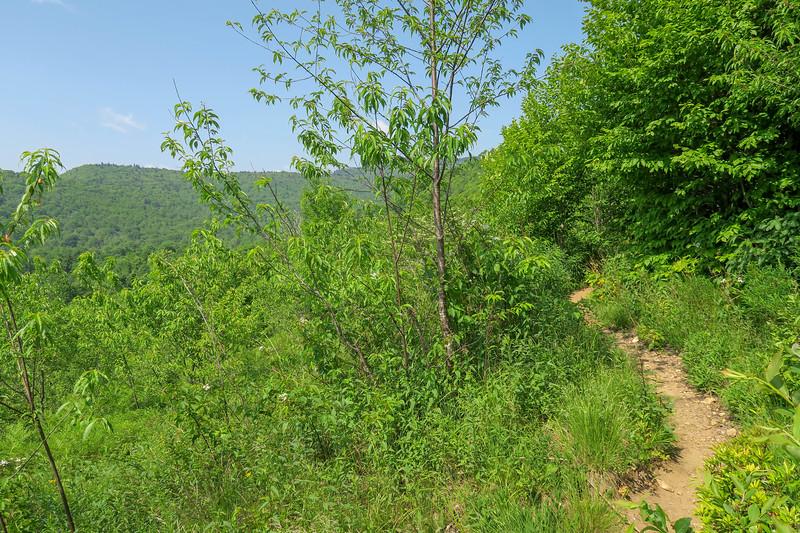 Graveyard Ridge Trail -- 5,240'