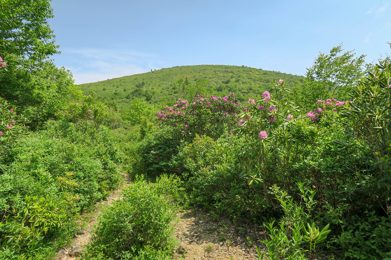 Graveyard Ridge Trail -- 5,580'