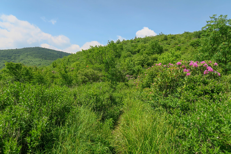Graveyard Ridge Trail -- 5,590'