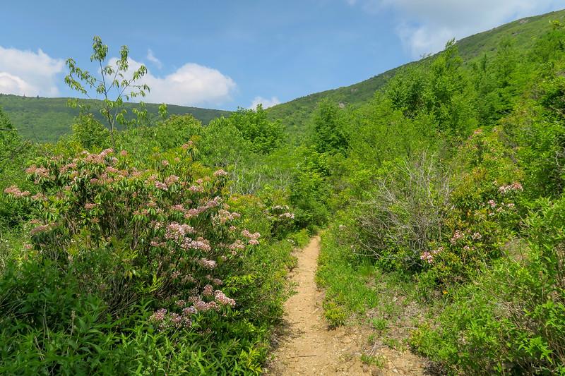 Graveyard Ridge Trail -- 5,490'