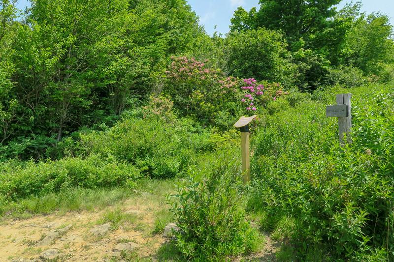 Graveyard Ridge/Greasy Cove Trail Junction -- 5,650'