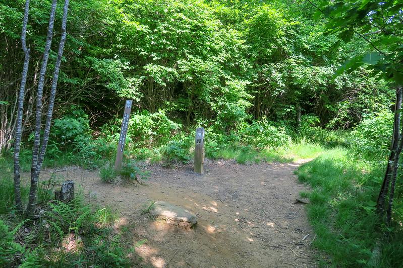 Graveyard Ridge/Mountains-to-Sea Trail East Junction -- 5,200'