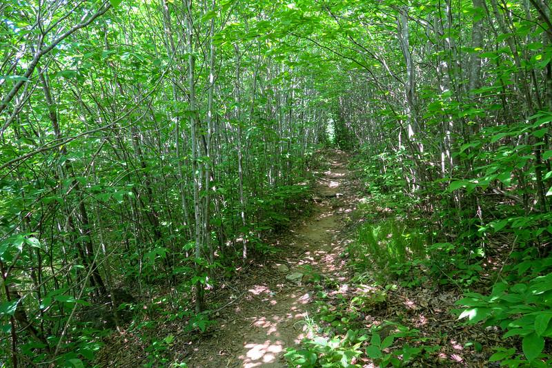 Graveyard Ridge Trail -- 5,220'