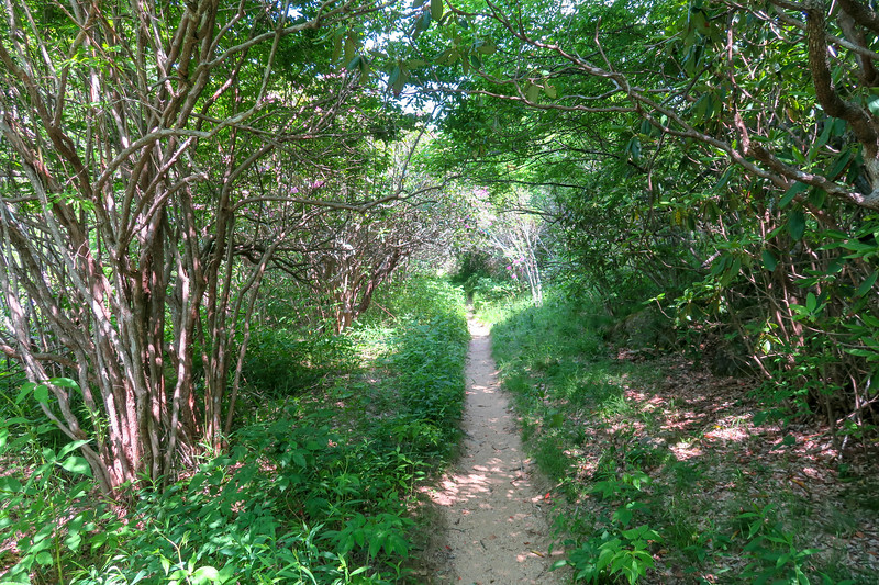 Graveyard Ridge Trail -- 5,390'