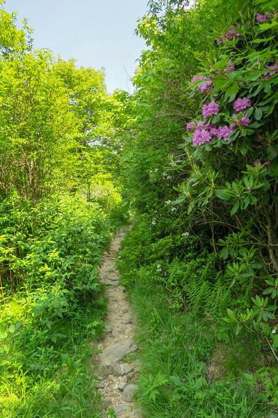 Graveyard Ridge Trail -- 5,370'