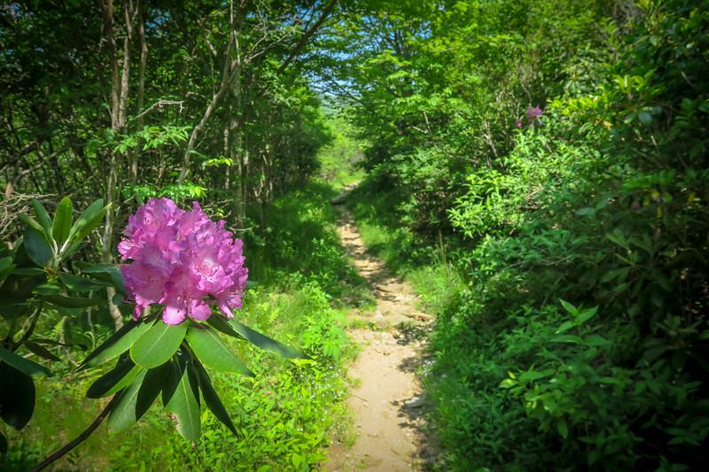 Graveyard Ridge Trail -- 5,310'