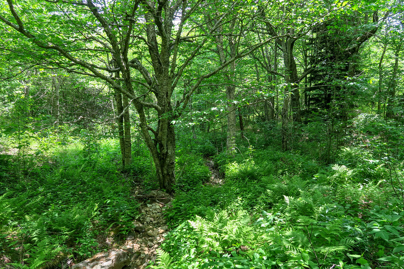 Graveyard Ridge Trail -- 5,550'