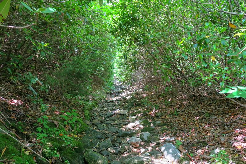 Graveyard Ridge Trail -- 5,530'