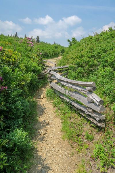 Graveyard Ridge Trail -- 5,690'