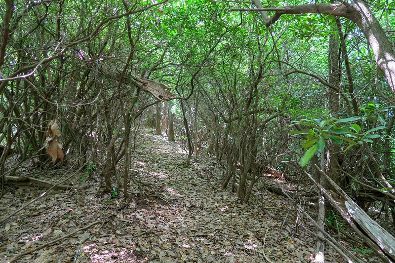 Green Mountain Trail -- 4,400'