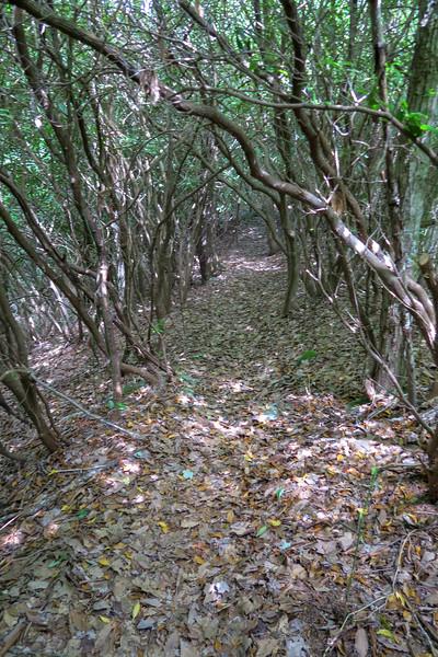 Green Mountain Trail -- 4,500'