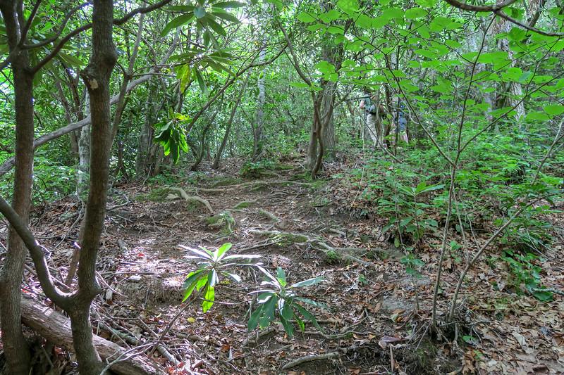 Green Mountain Trail -- 3,200'