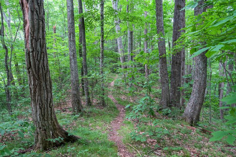 Green Mountain Trail -- 3,540'