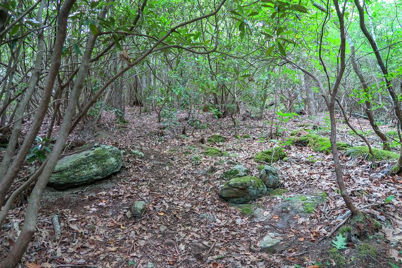 Green Mountain Trail -- 3,900'