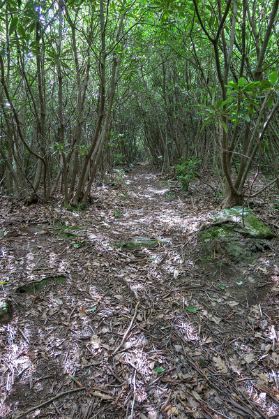 Green Mountain Trail -- 3,400'
