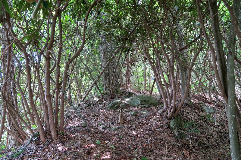Green Mountain Trail -- 4,900'