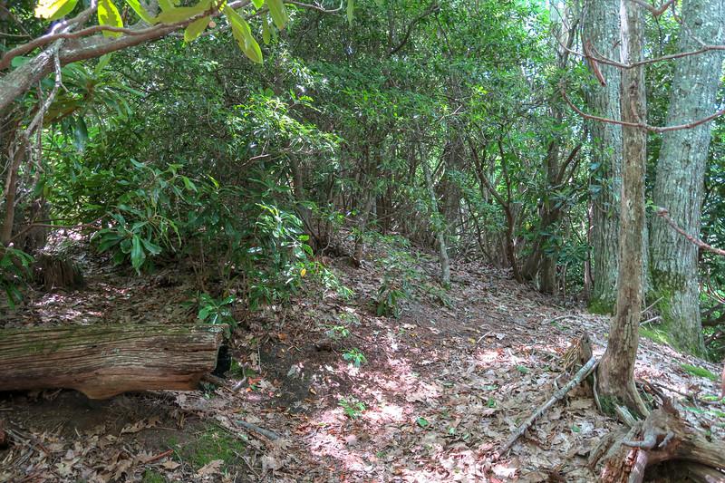 Green Mountain Trail -- 4,780'