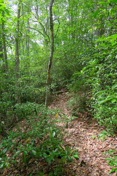 Green Mountain Trail -- 4,000'