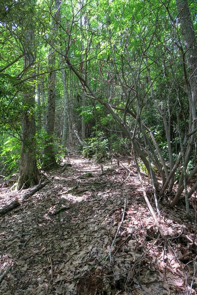 Green Mountain Trail -- 4,680'