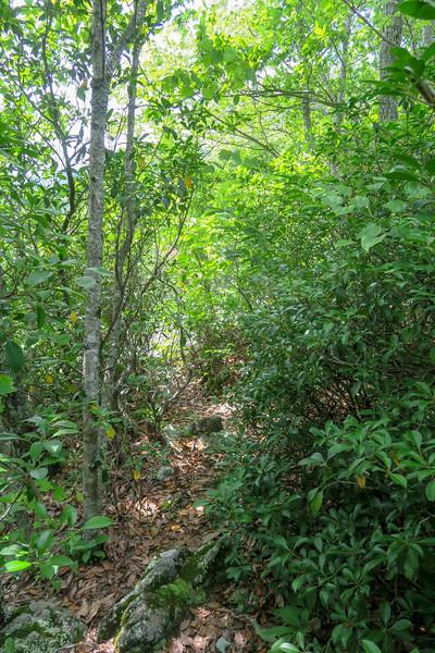 Green Mountain Trail -- 4,270'