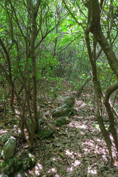 Green Mountain Trail -- 4,340'