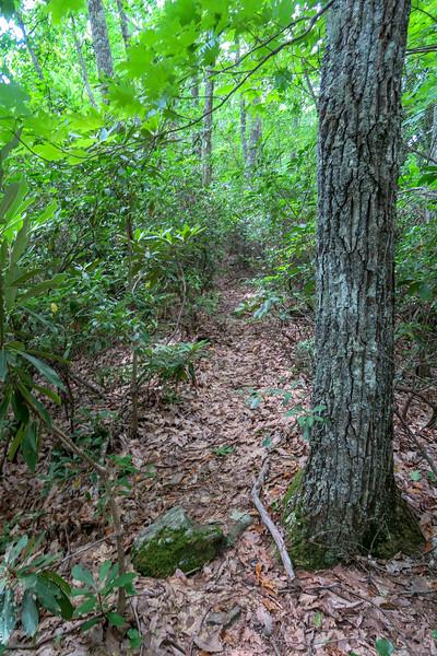 Green Mountain Trail -- 3,950'
