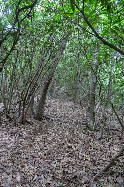 Green Mountain Trail -- 3,800'