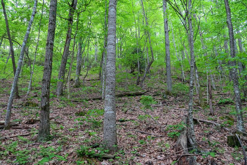 Green's Lick Trail -- 3,020'
