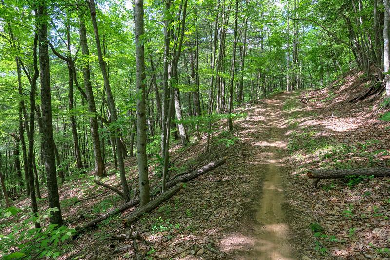 Green's Lick Trail -- 2,700'