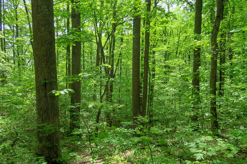 Green's Lick Trail -- 3,280'