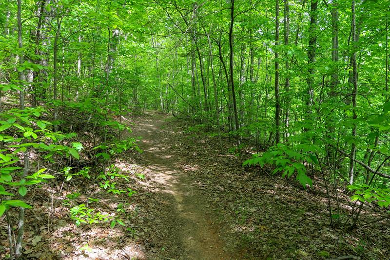 Green's Lick Trail -- 3,260'