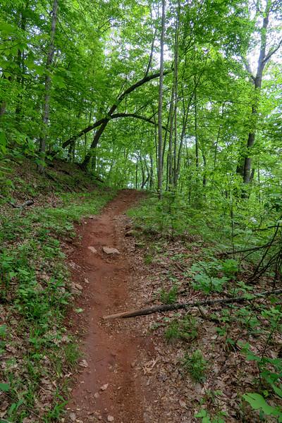 Green's Lick Trail -- 3,150'