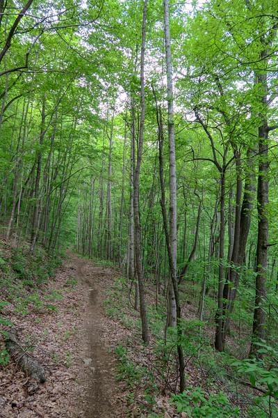Green's Lick Trail -- 3,010'