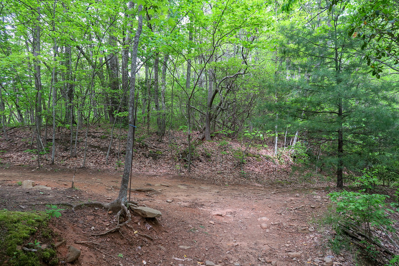 Green's Lick Trail/North Boundary Road Junction -- 3,320'