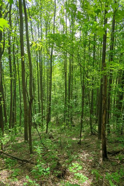 Green's Lick Trail -- 3,000'