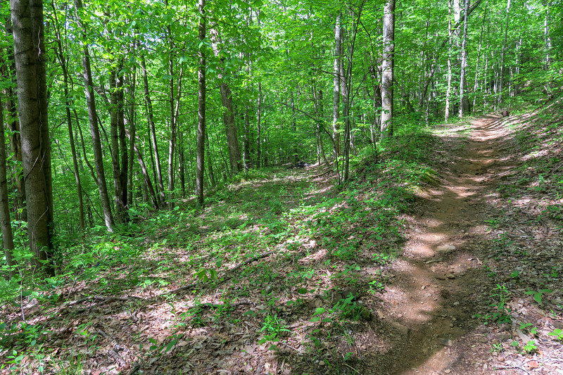 Green's Lick Trail -- 2,880'