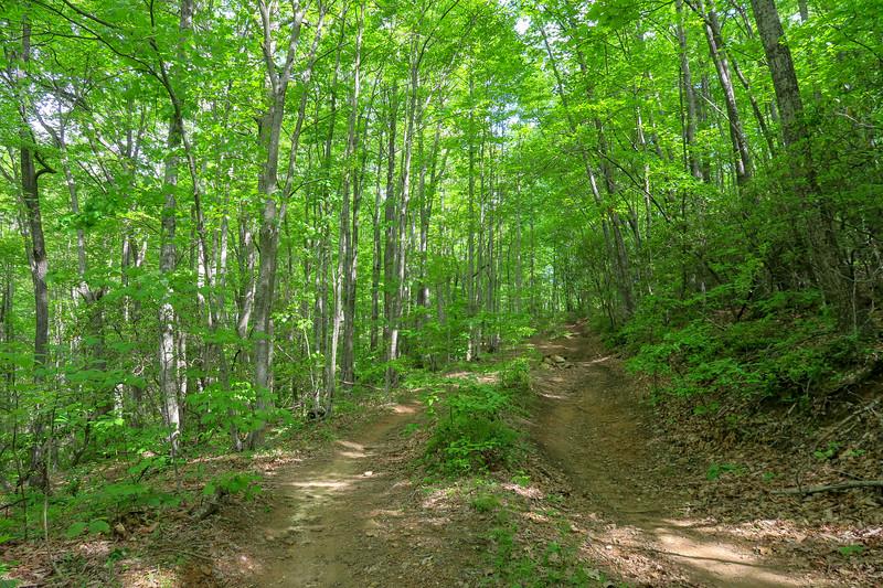 Green's Lick Trail -- 2,940'