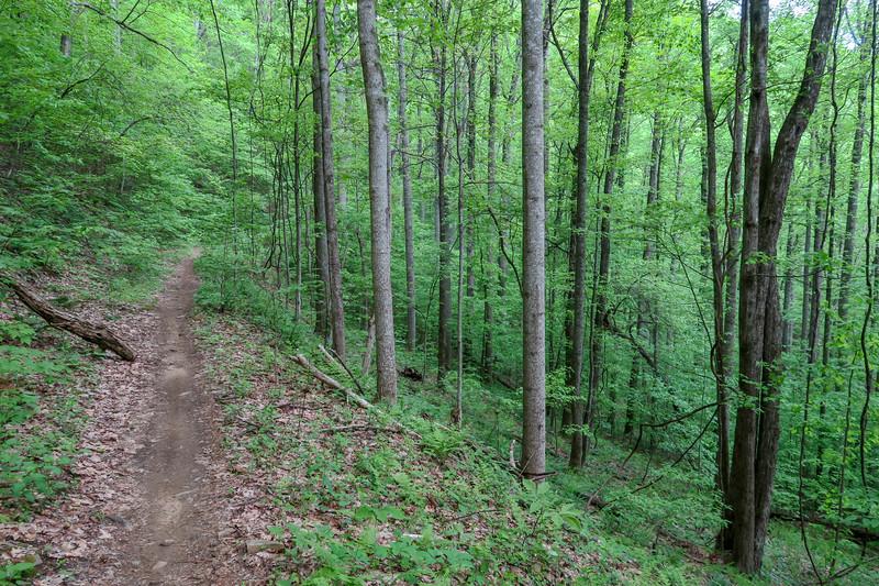 Green's Lick Trail -- 3,030'