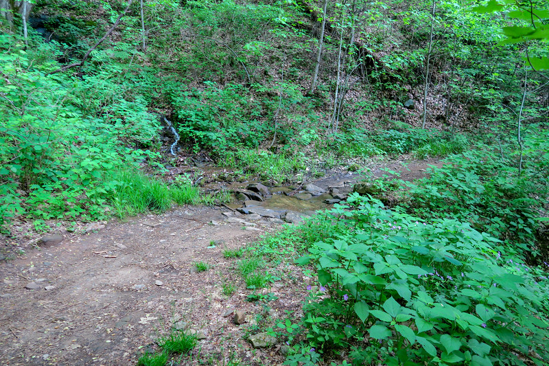 Green's Lick Trail -- 3,040'
