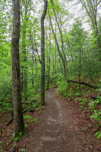Hardtimes Connector Trail -- 2,140'