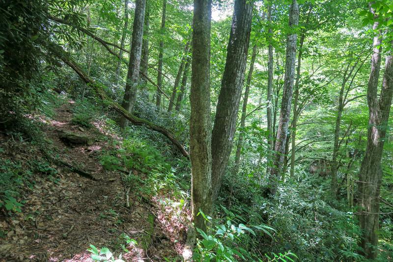 Haywood Gap Trail -- 3,860'
