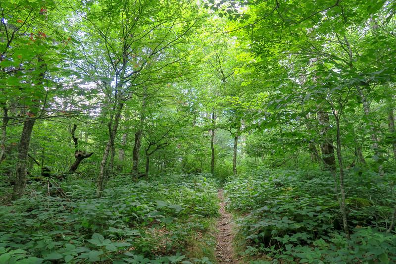 Haywood Gap Trail -- 5,200'