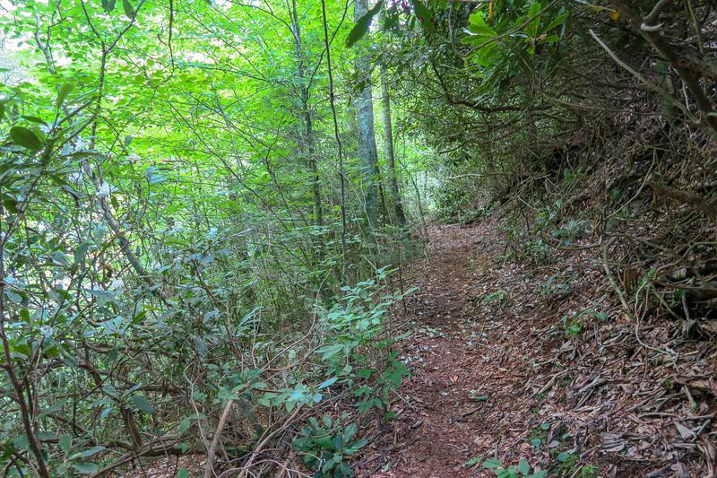 Haywood Gap Trail -- 4,780'