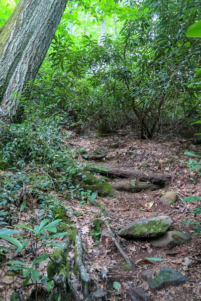 Haywood Gap Trail -- 3,800'